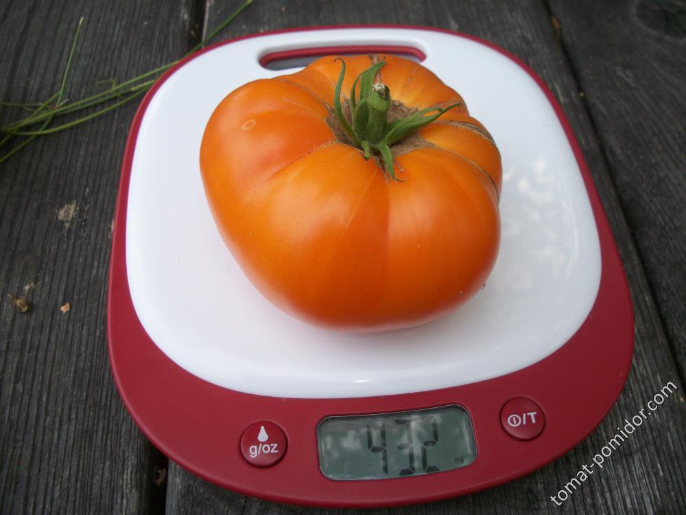 томат Джамбо Джим оранжевый