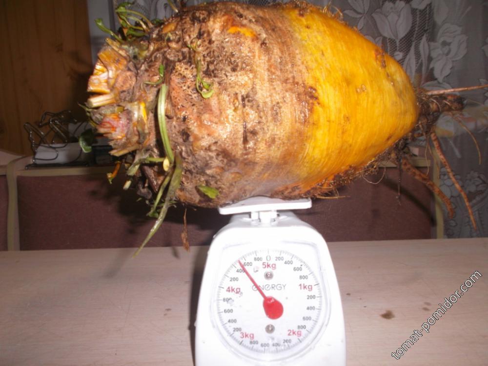Рекорд 2017  - 4 кг.500 гр.