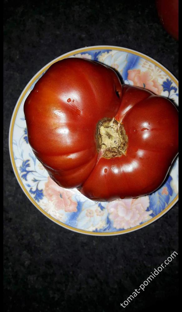 tomatoyunkie