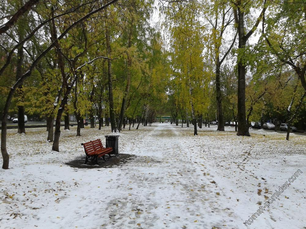 Первый снег
