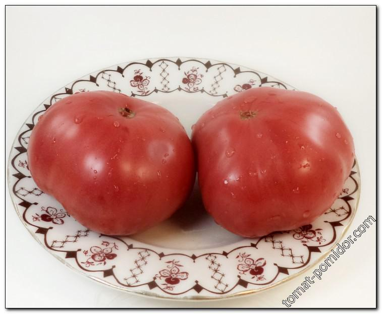 Великан розовый (Velikan rozovyi)