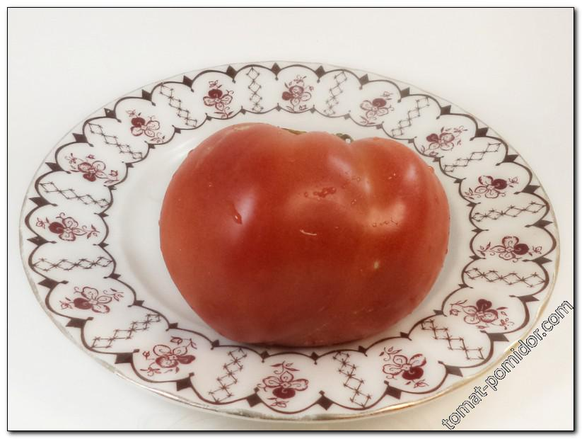 Северные плоды (Severnye Plody)