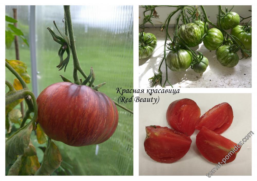 Красная красавица (Red Beauty)