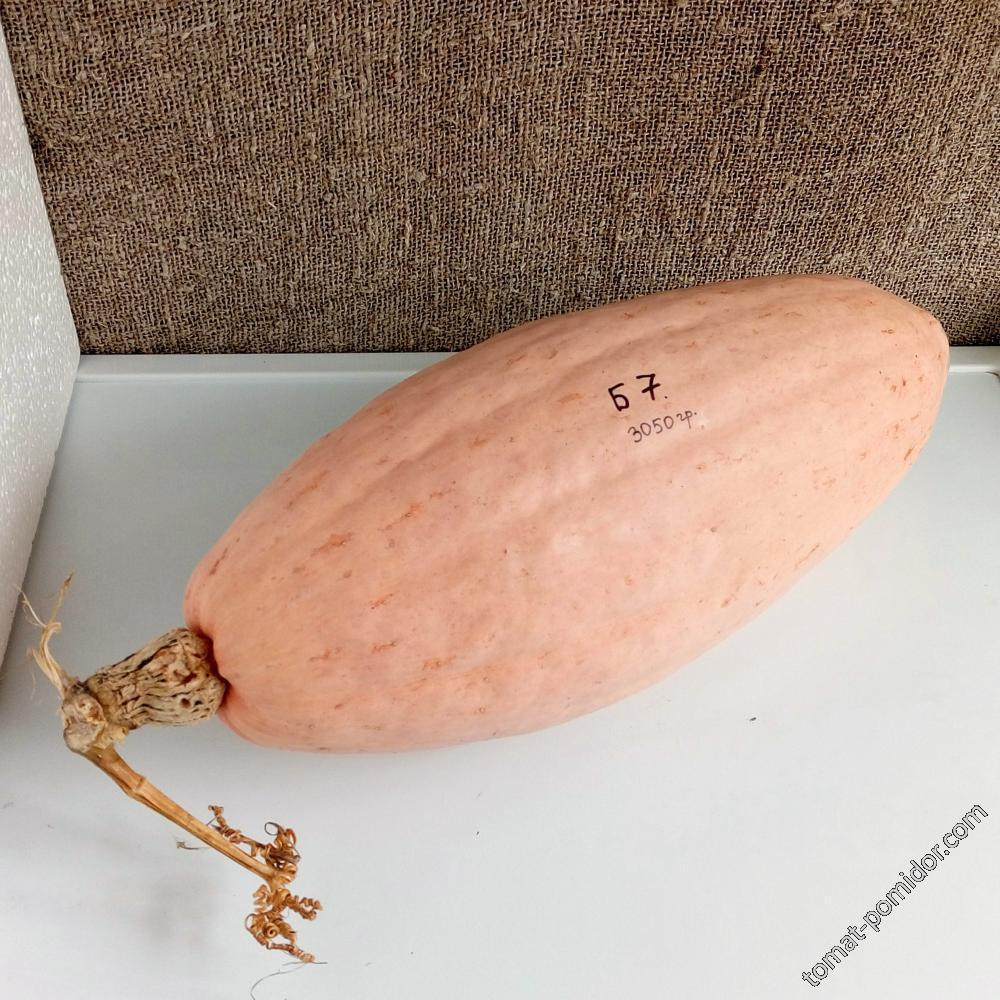 Тыква Розовый Банан #7 (свои семена)