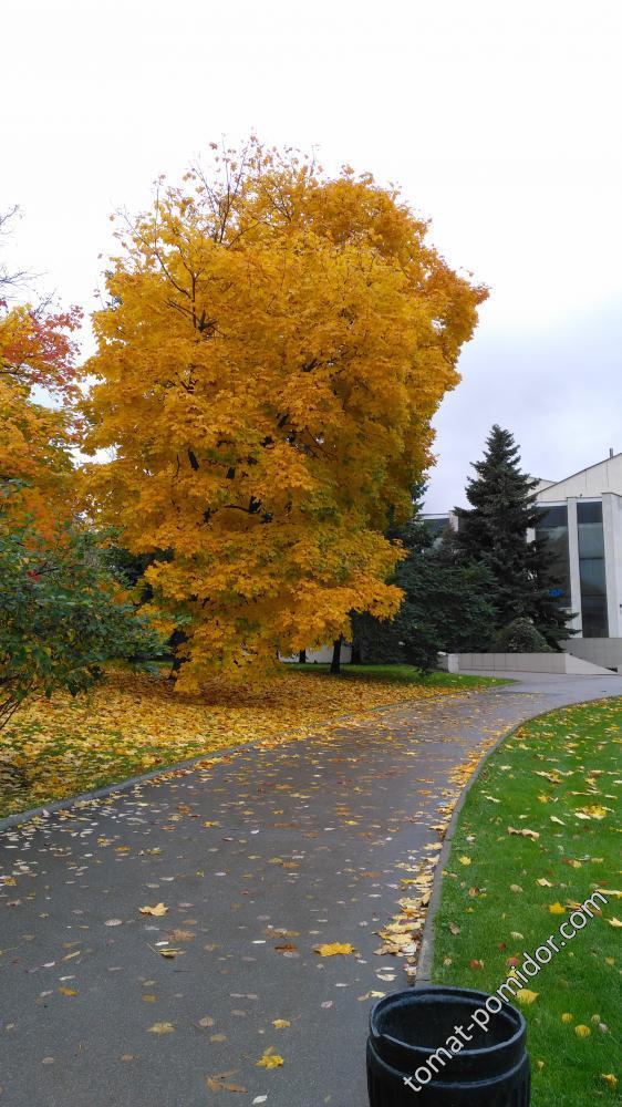 Осень. ВДНХ