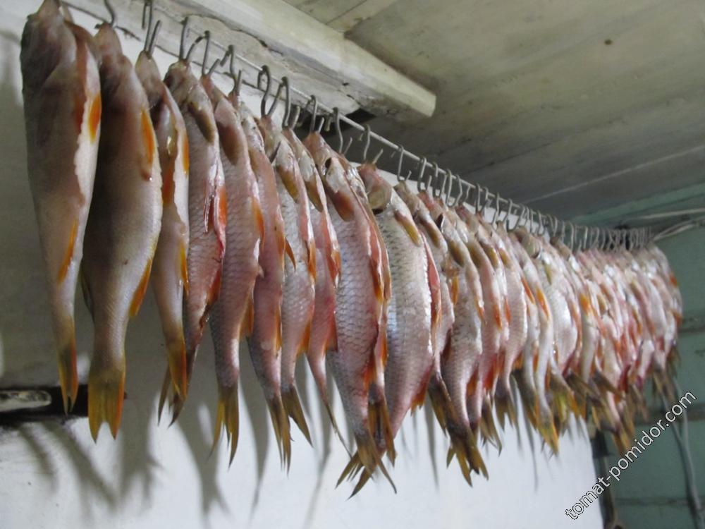 Рыбка к пиву )
