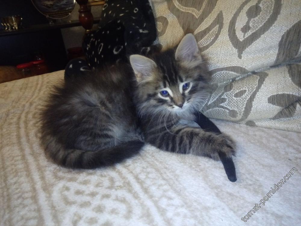 Тяжела котячья жизнь