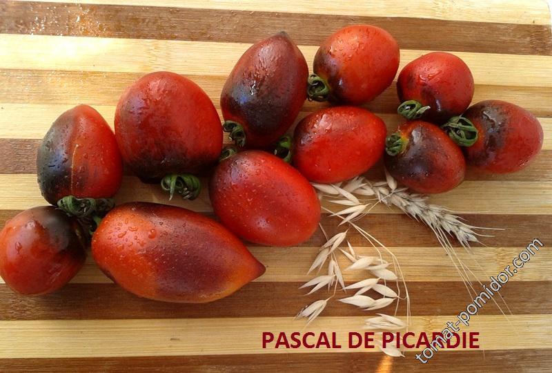PASCAL DE PICARDIE