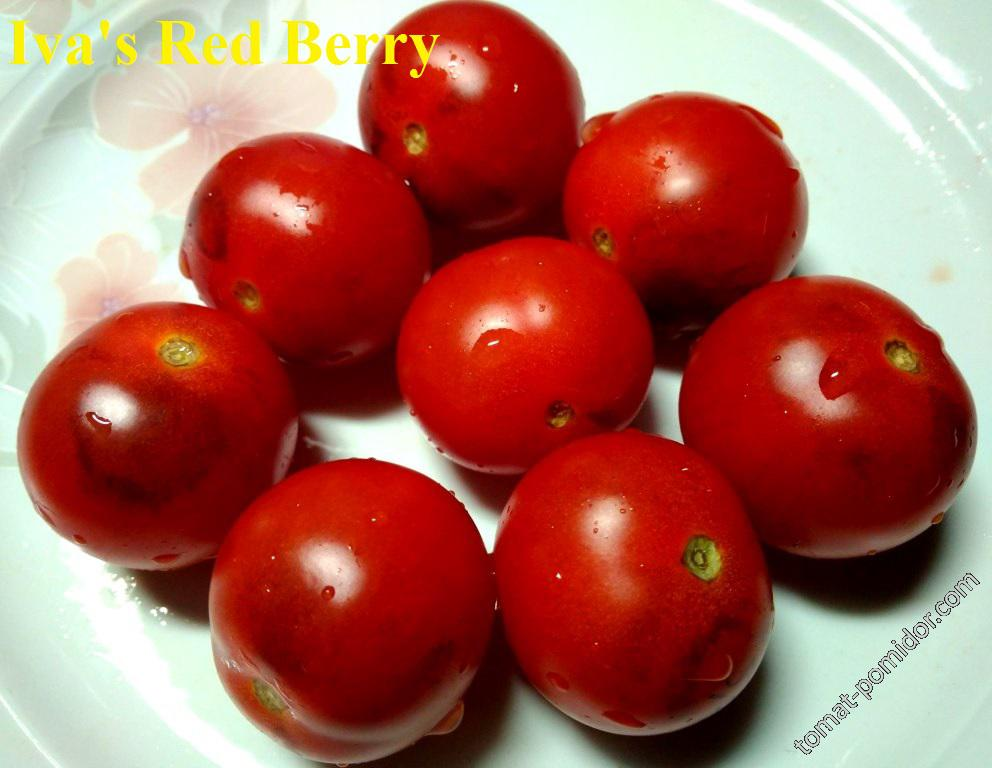 Iva s Red Berry blue