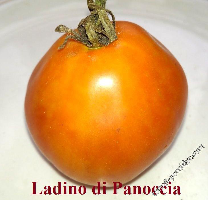 Ladino de Panocia