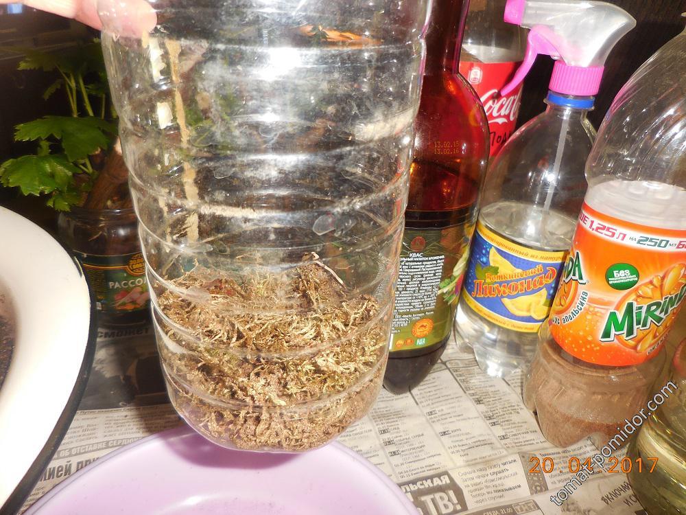 Слой моха в емкости