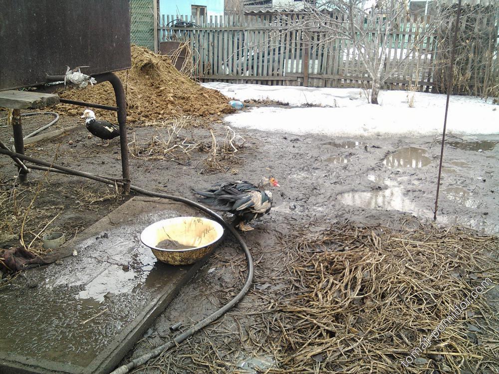 грязь+утки=ЩАСТЬЕ!