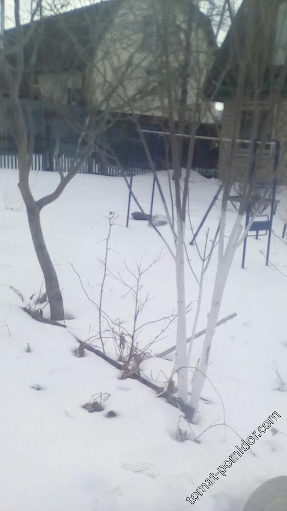 Сад 1 апреля