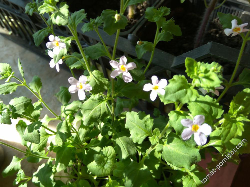 Блютопия во всю цветет