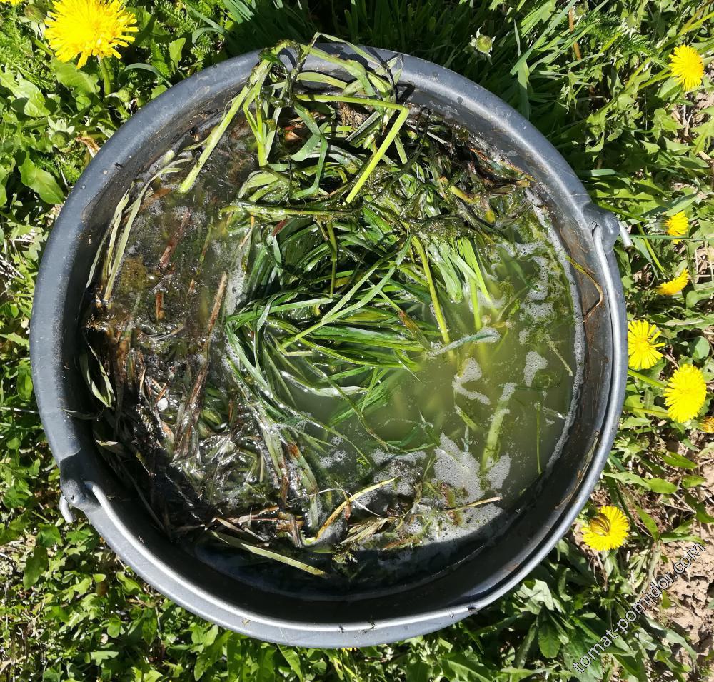 Травяная бражка