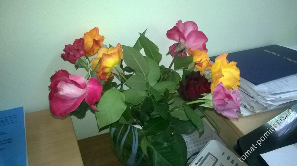 Розы на работу. 25.05.18