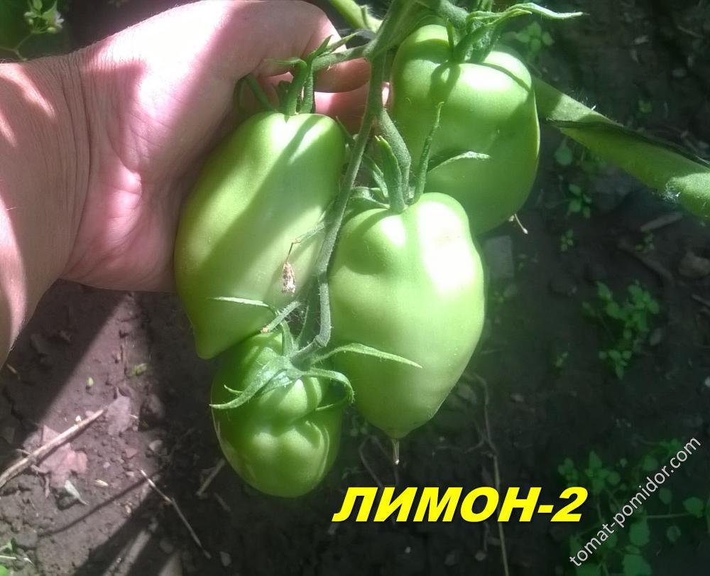ЛИМОН-2