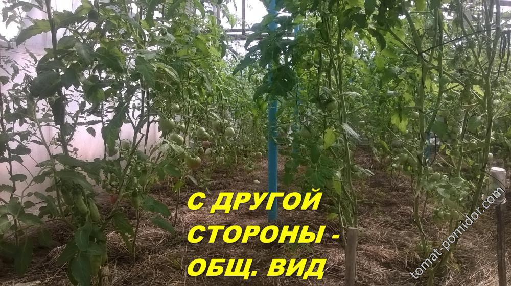 ОБЩИЙ ВИД