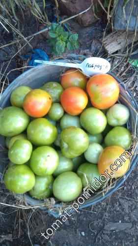 Перчики и помидорки.