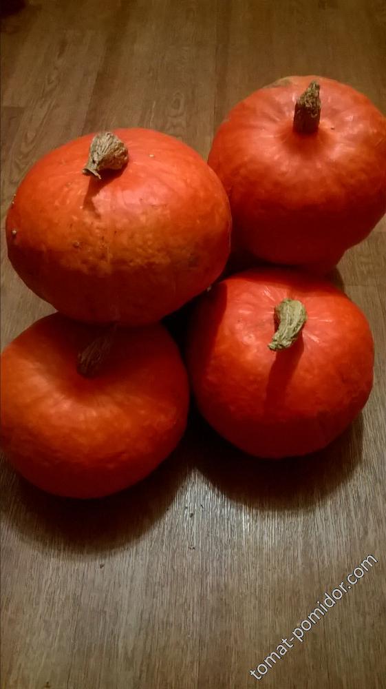оранж самер