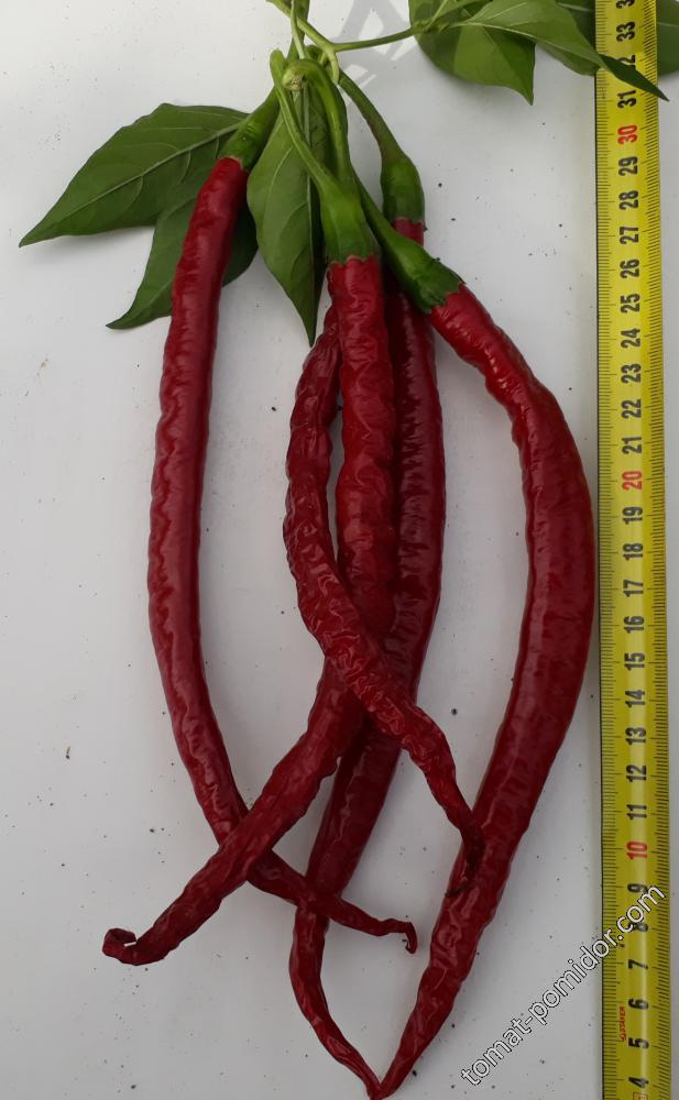 Joe`s Long Cayenne