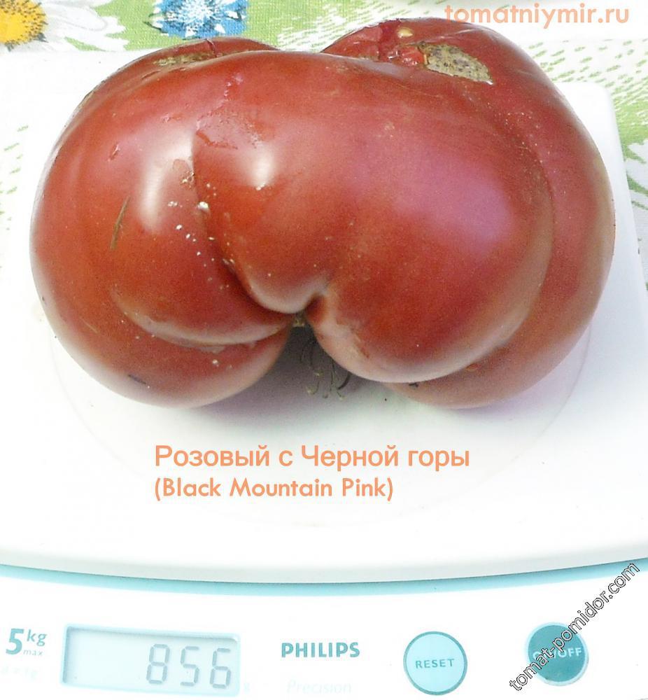 Томат Розовый с черной горы: отзывы об урожайности помидоров, описание и характеристика сорта