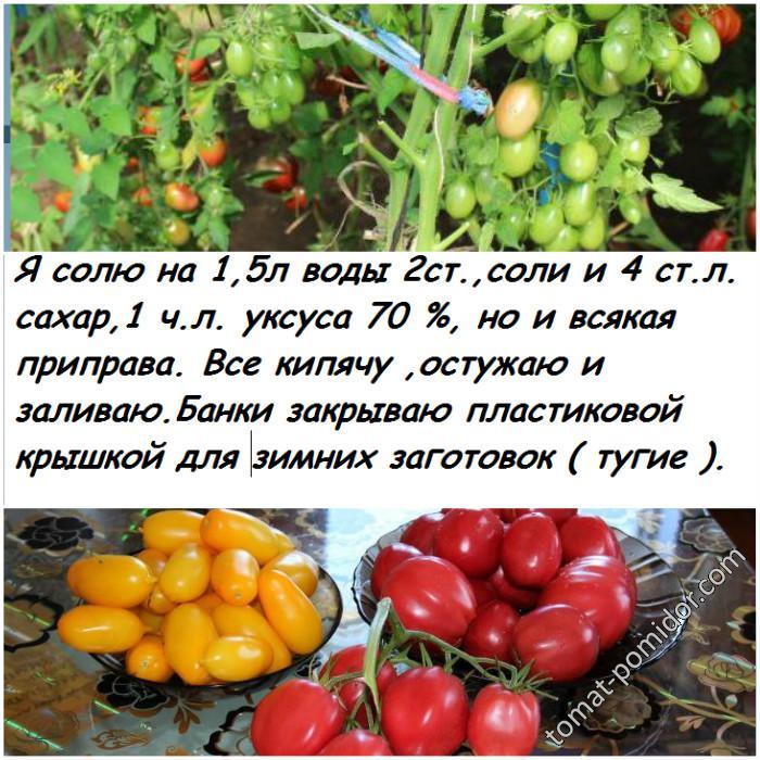 АБАКАН томаты 2018
