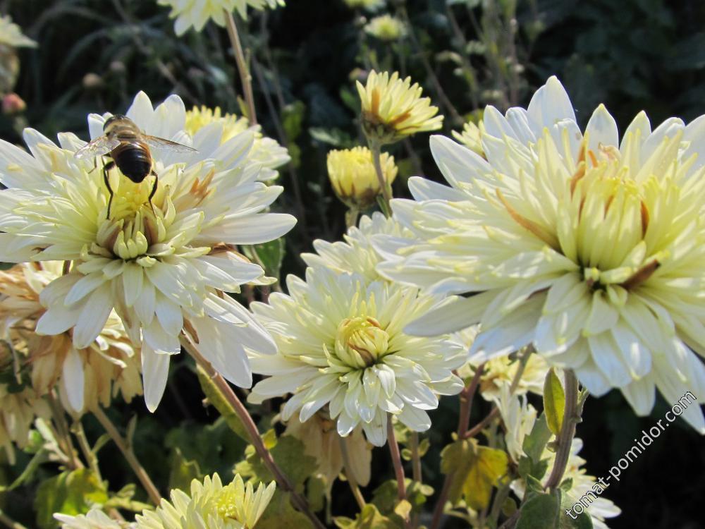 А пчелки все летают )))