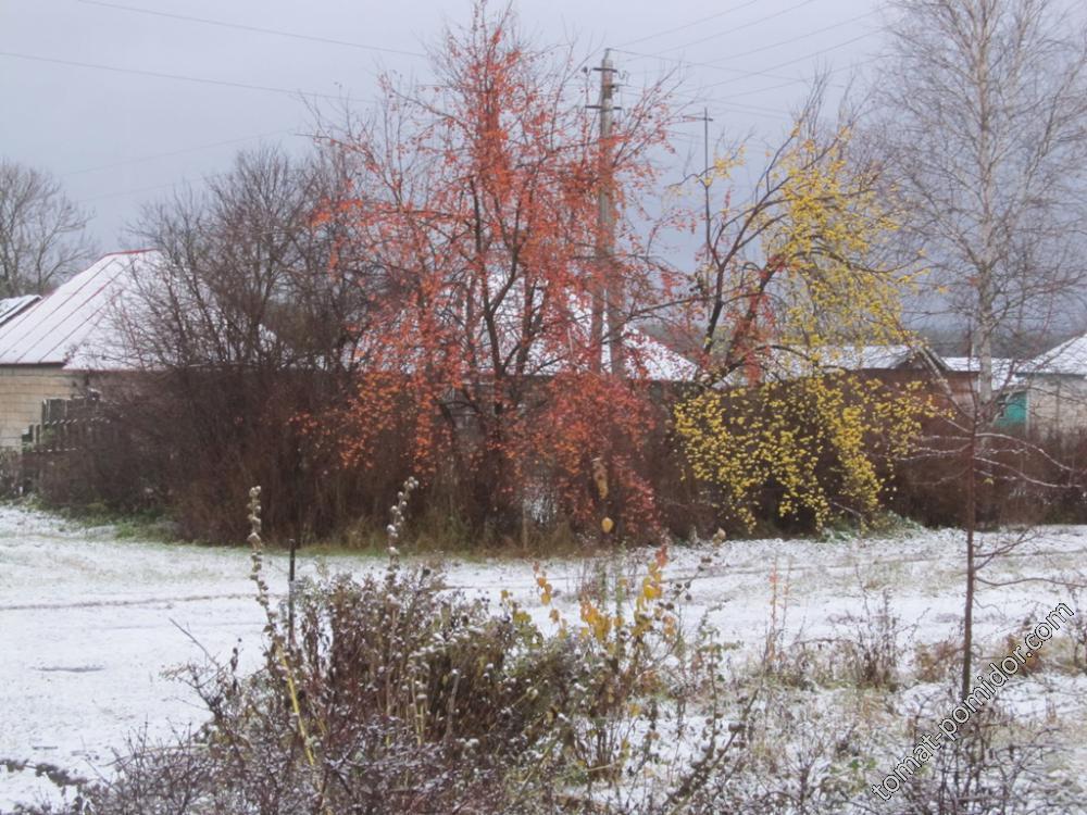 Снег и яблоки!