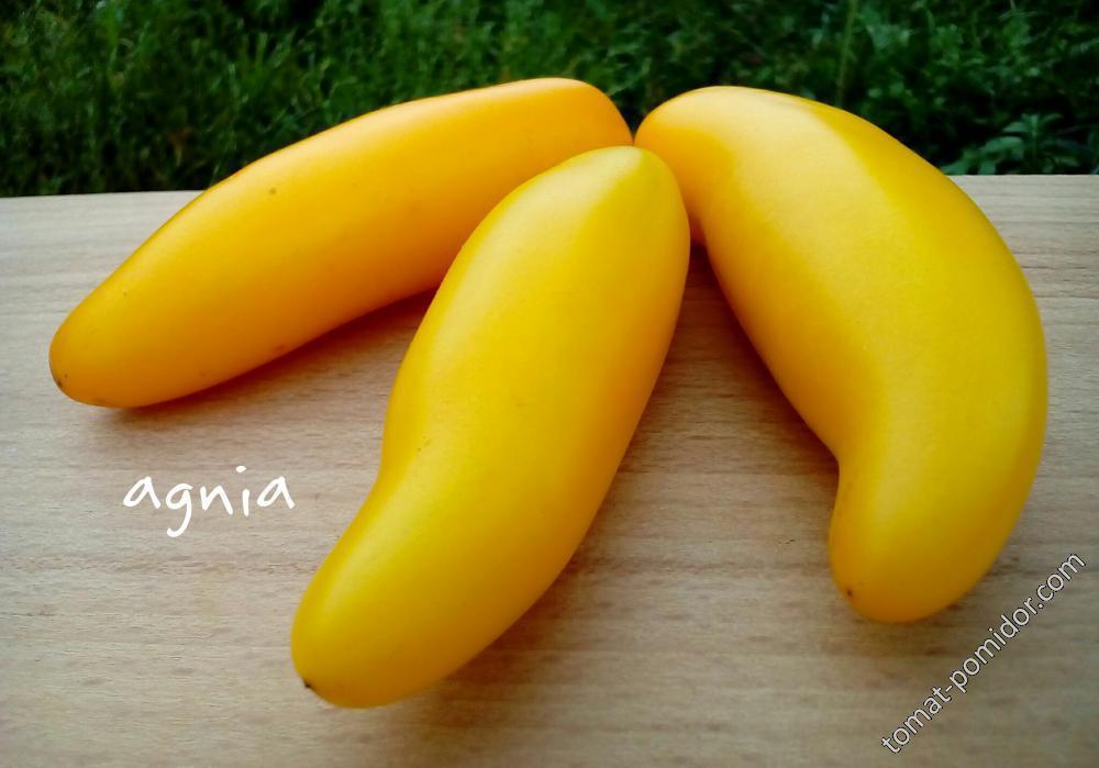 Bananu (Банану)