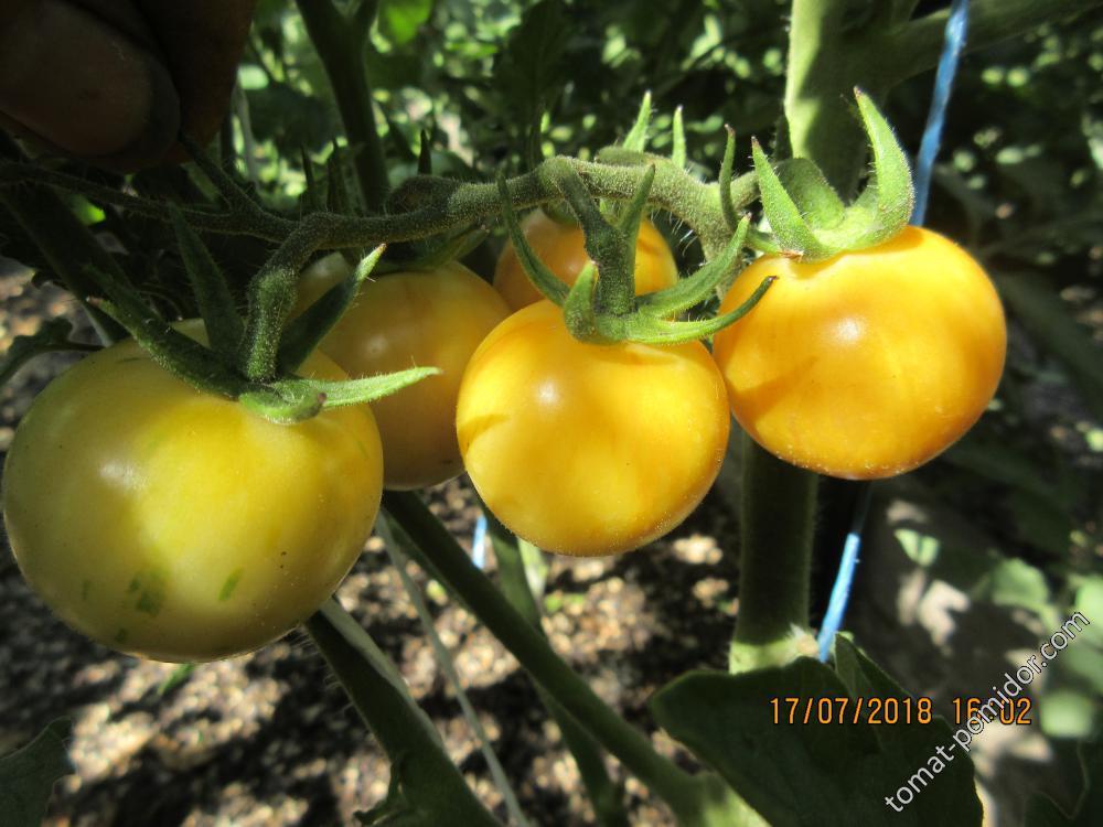 Персик Блов Саттон плоды