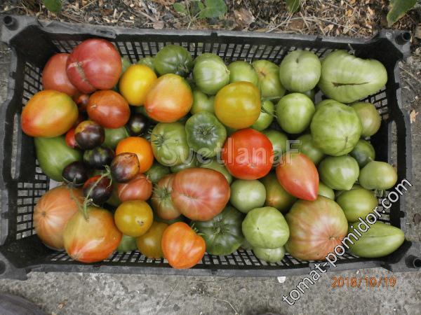 томаты в ЗГ 19-10-18