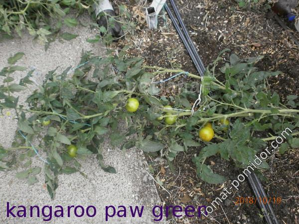 Kangaroo Paw Green (Зеленая лапа кенгуру)-1582