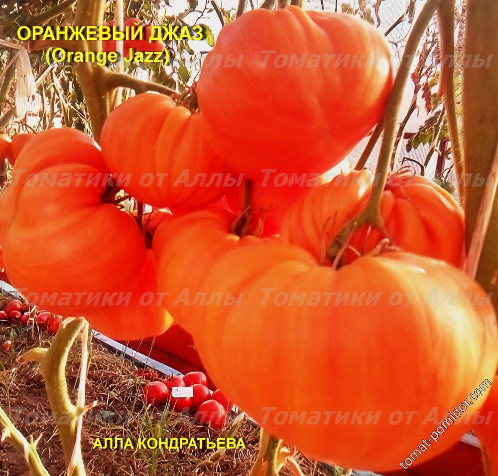 Оранжевый Джаз