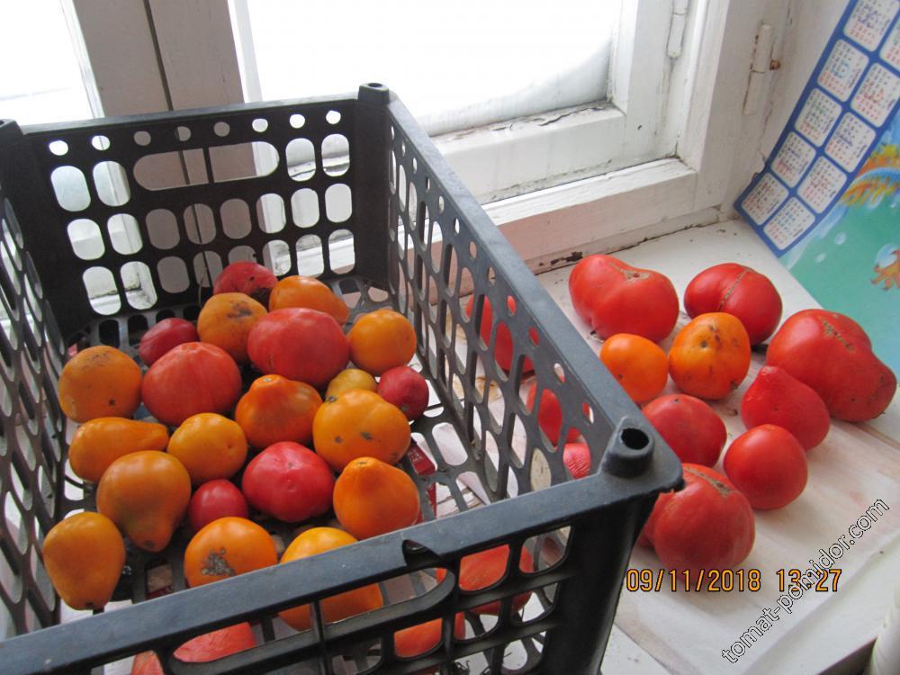 Хранение свежих плодов томата.
