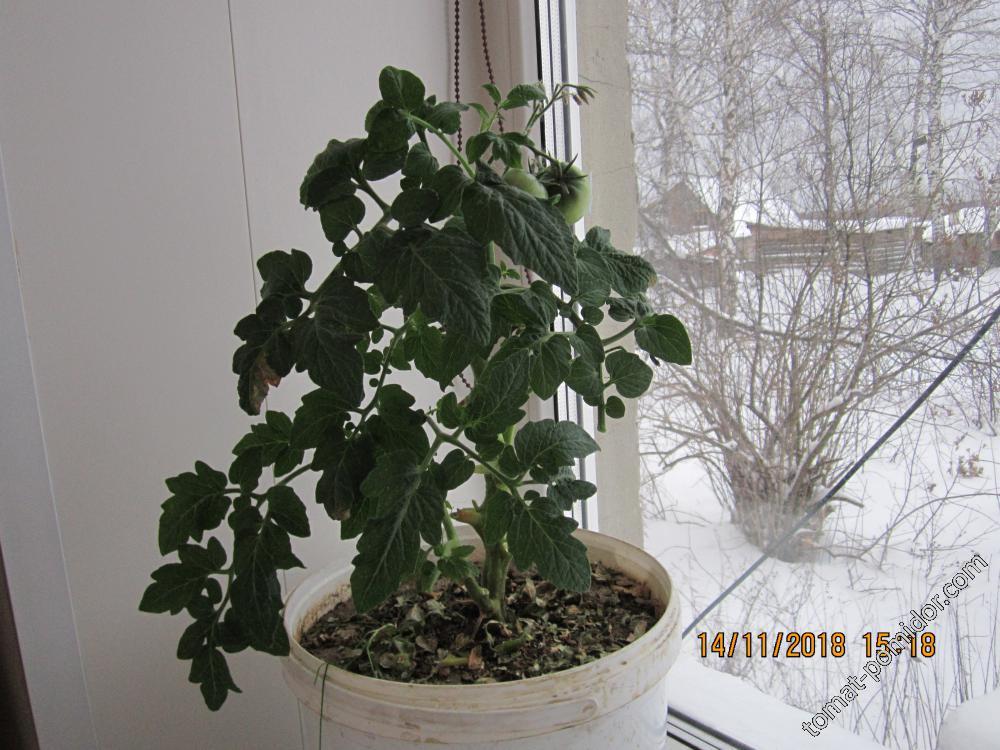 Эксперимент продолжается, хоть за окном и зима.