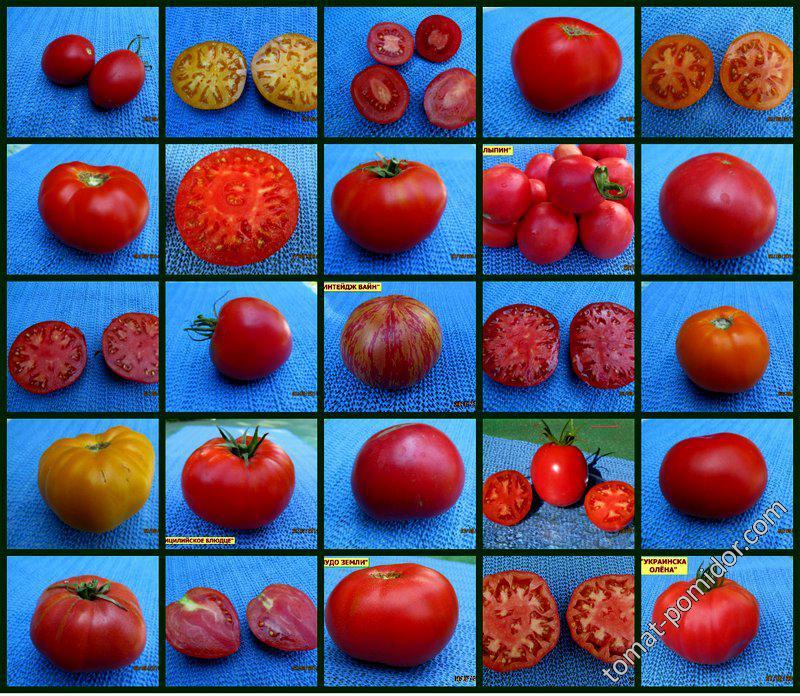 Моё представление каким должен быть помидор