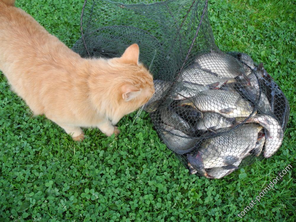 Барсик и рыбка