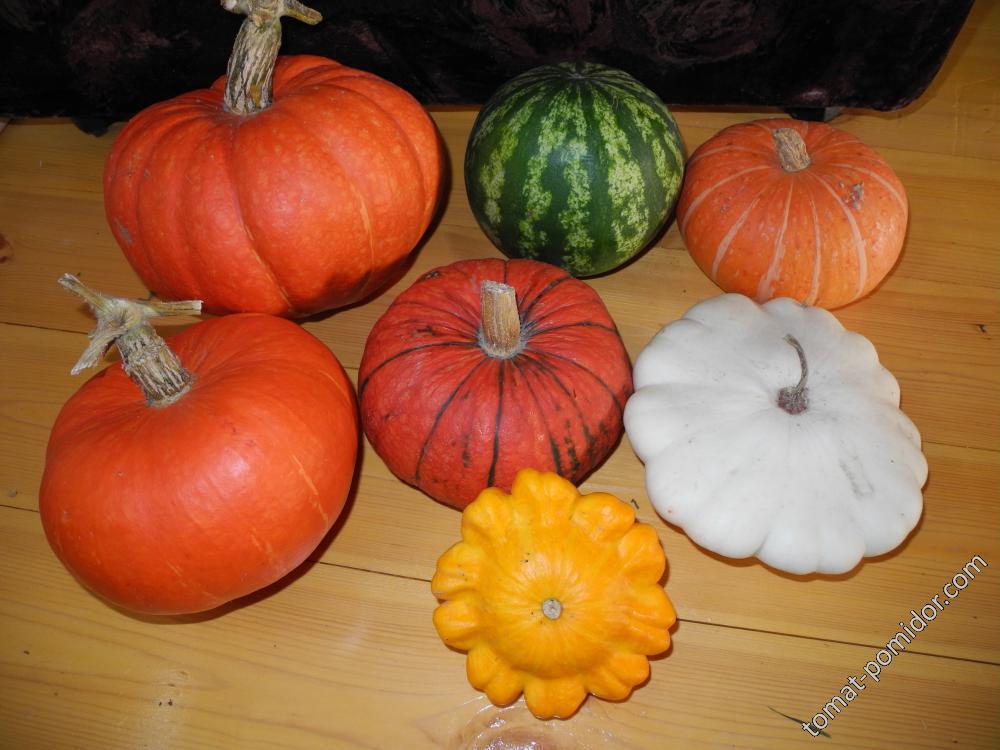 Тыквы Конфетка и Улыбка, арбуз и патиссоны(на семена)