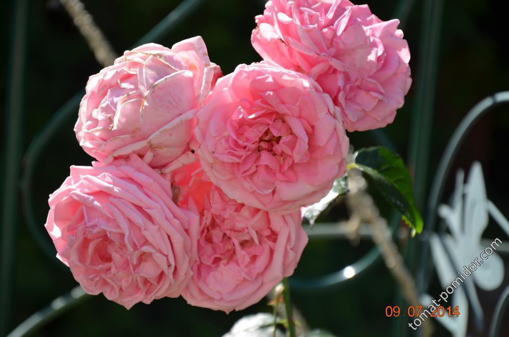 цветули