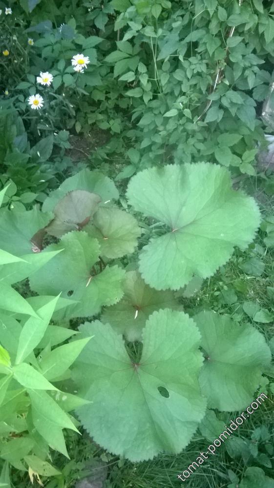 Цветок от Ирины