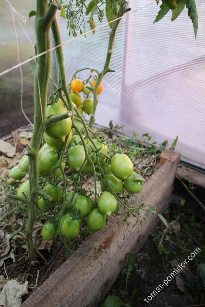 Цитрусовый сад