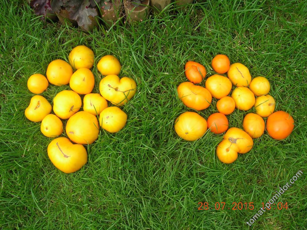 28 июля - Лимонковые гиганты разные