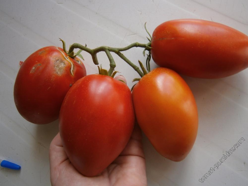 Саяногорский перцевидный красный