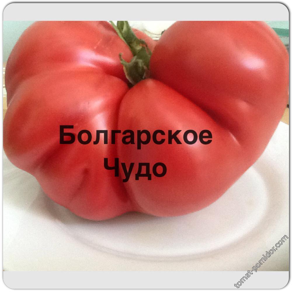 Болгарское Чудо
