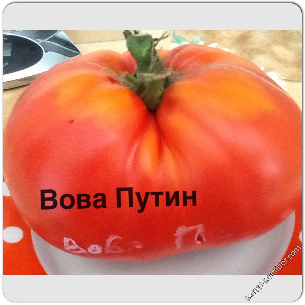 Вова Путин ( теплица)