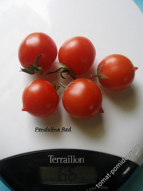 Pendulina Red