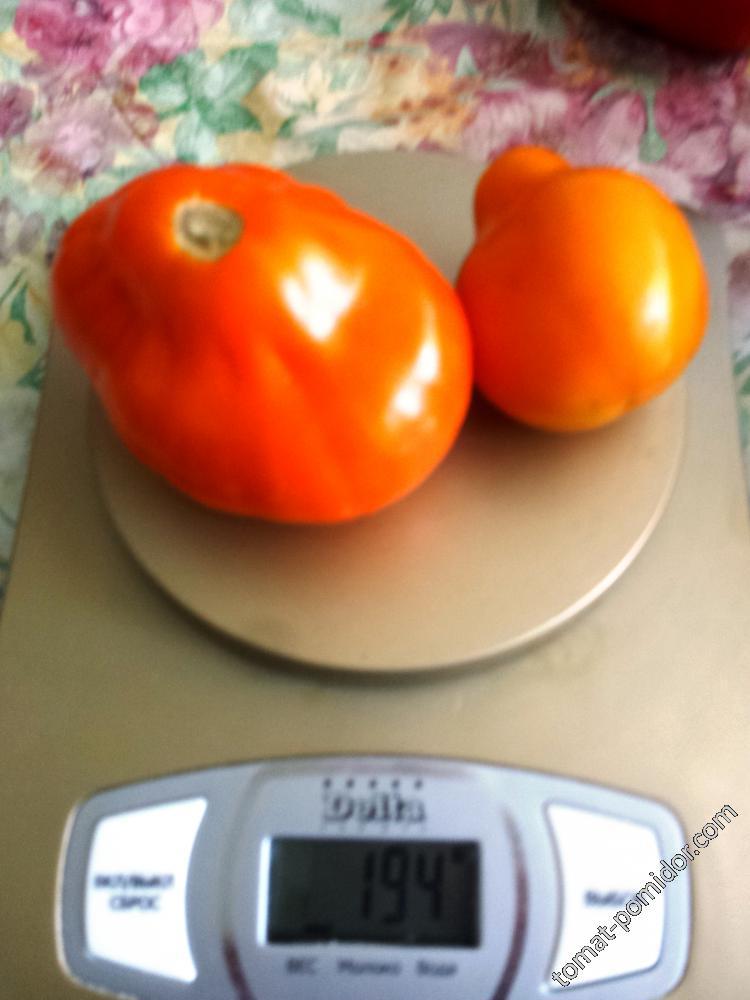 Оранжевый Бредеро