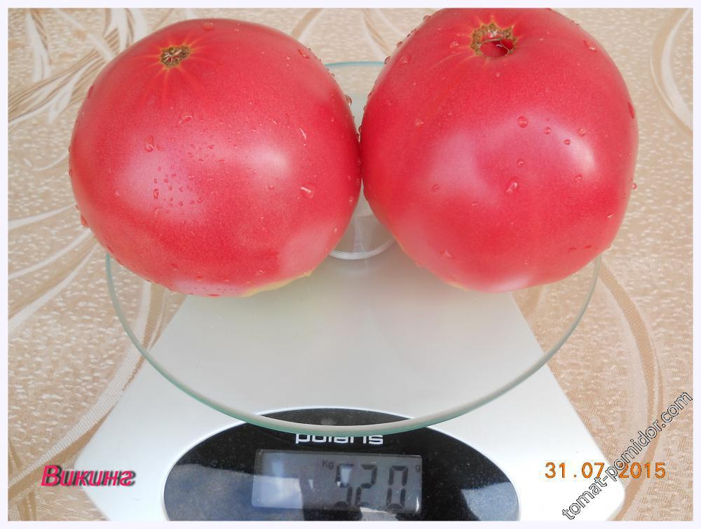 Сорта томатов в 2015 году