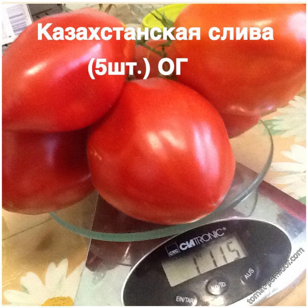 Казахстанская слива